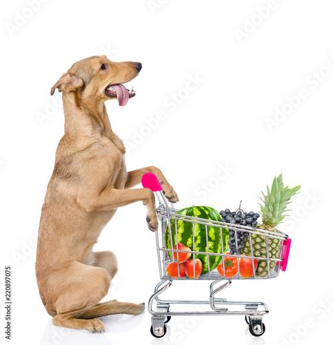 Mixed breed dog with shopping trolley  isolated on white