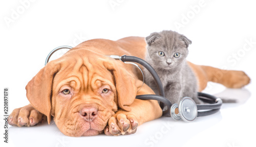 plakat Tiny kitten and puppy with stethoscope on his neck. isolated on white background
