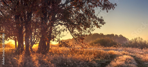 Poster Marron chocolat Panoramic landscape of autumn nature in the clear october morning. Large tree on golden grass in sunlight. Autumn nature landscape on sunrise.