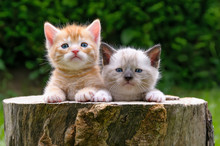 Two Baby Kittens In A Hollowed...