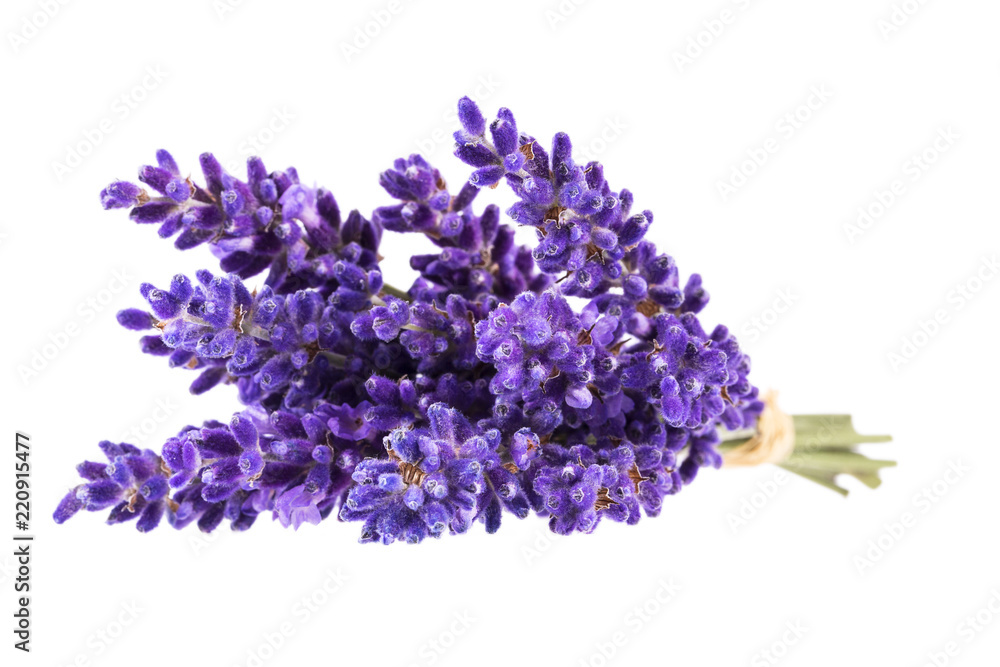 Fototapety, obrazy: Bouguet of violet lavendula flowers isolated on white background, close up