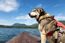 Dog On A Rusty Boat During A V...
