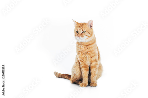 Obraz cute domestic tabby cat sitting and looking away isolated on white - fototapety do salonu