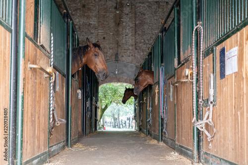 Obraz na plátně  Horses
