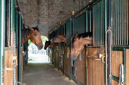 Fotografie, Obraz  Horses