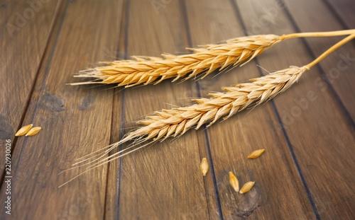 Closeup of Golden Barley / Wheat Plants