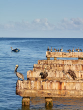 Abandoned Dock With Pelicans