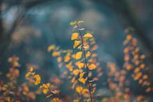 Beautiful Nature Of Georgia. Autumn Colours