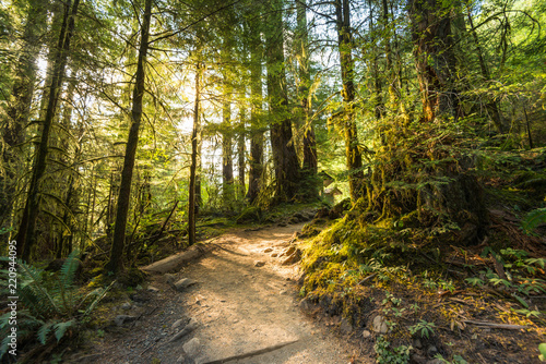Photo Stands Road in forest scenic view of path way in the forest with sun light.