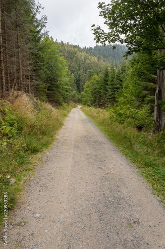 Tuinposter Weg in bos Chemin forestier