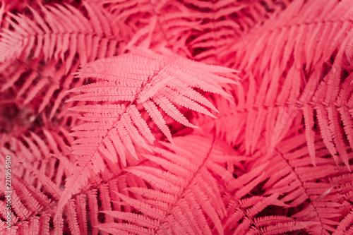 Fotografie, Obraz  Fougères dans la forêt en infrarouge