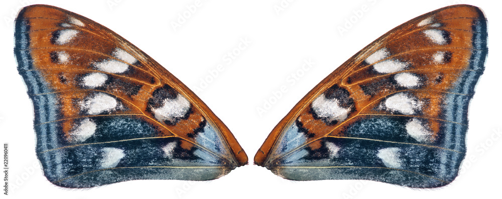 orange and cyan couple butterfly wings on white
