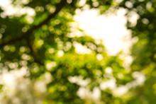 Blurred Green Leaves Backgroun...
