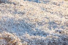 Bush Covered In Snow