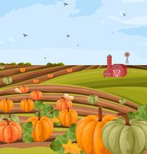 Pumpkins Harvest Vector. Autumn Seasonal Banner Templates