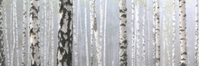 Beautiful Birch Trees With Whi...