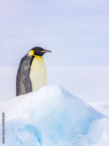 Penguin amdist blue ice