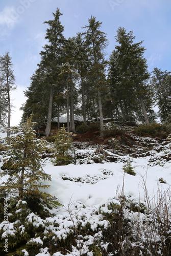 Fotografie, Obraz  winter landscape with firs