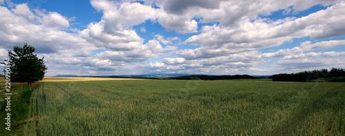 Fototapeta Polski wiejski krajobraz, pole obsiane pszenicą pod białymi obłokami obraz