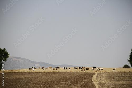 Staande foto Donkergrijs field