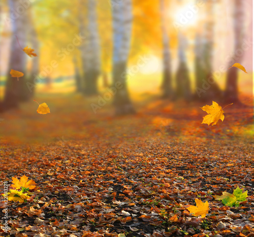 Staande foto Meloen Beautiful autumn landscape with yellow trees,green and sun. Colorful foliage in the park. Falling leaves natural background