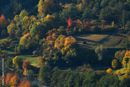 Aerial view of houses and forest in autumn season Fototapet