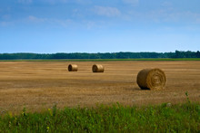 Beautiful Landscape, Agricultural Field And Round Bundles Of Dry Grass In The Field Against The Blue Sky In Minnesota. Bales Of Hay To Feed Cattle In Winter