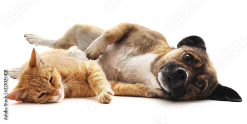Photo sur Toile Chat Kitten and puppy.
