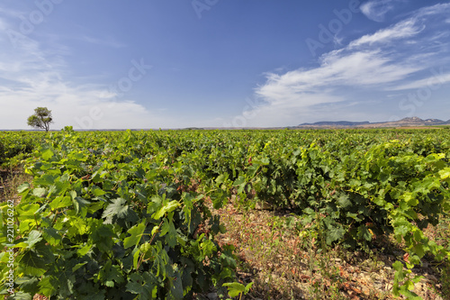 Vineyards in the region of La Rioja in Spain