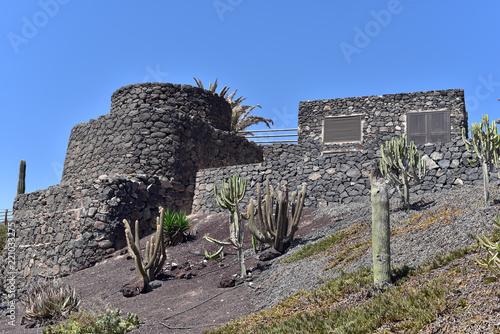 Deurstickers Canarische Eilanden A cactus garden in Fuerteventura Island, Canary Islands, Spain