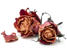 Dried Rose Flower Head Isolate...