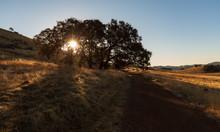 Sunrise At Cronan Ranch Along Dirt Road And Oak Trees