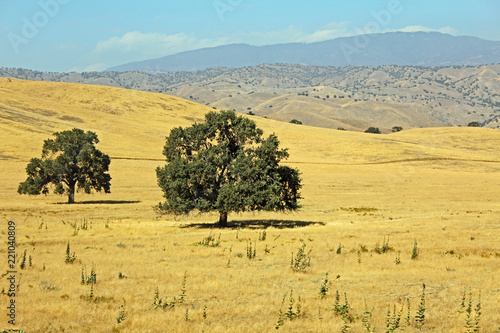 Central California landscape