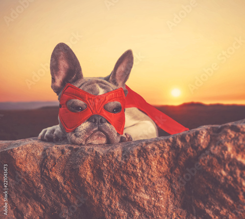 cute french bulldog with a super hero costume on at sunset