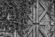 Barn Doors (Monochrome)