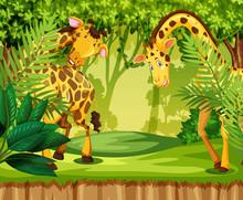 Giraffe In The Jungle