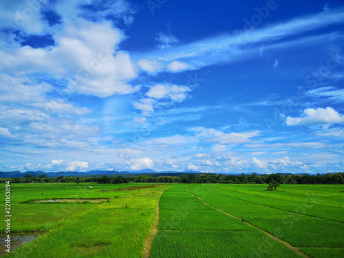 Deurstickers Groene Beautiful green paddy field and blue sky, Nature background.