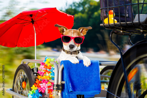 Foto op Aluminium Crazy dog dog on a bike trailer on summer vacation