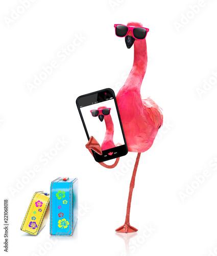 Papiers peints Chien de Crazy flamingo taking a selfie