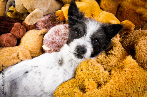 Foto op Aluminium Crazy dog cozy dog in bed with teddy bears