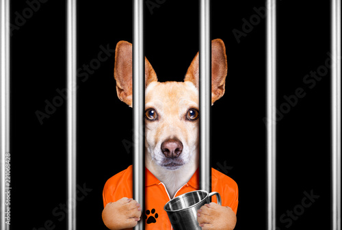 Deurstickers Crazy dog dog behind bars in jail prison