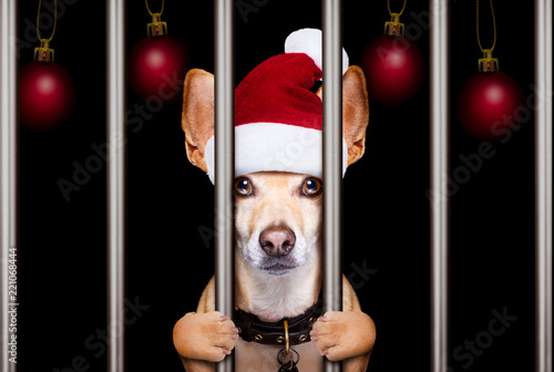Deurstickers Crazy dog christmas mugshot dog