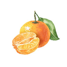 Hand Drawn Watercolor Tangerine Illustration Isolated On White Background. Citrus Fruit Colorful Tasty Food Drawing.