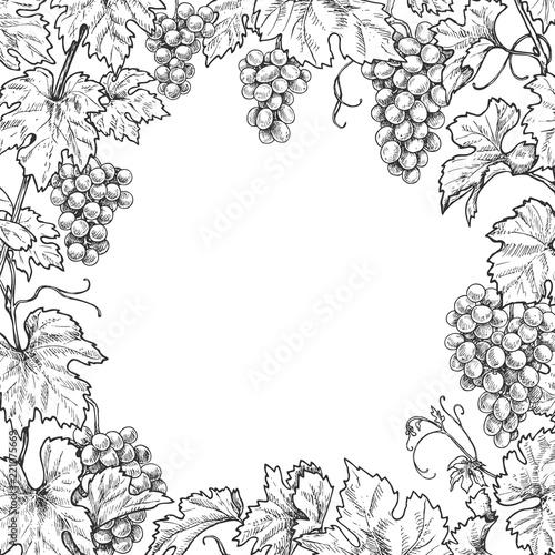 Monochrome Grape Branches Square Frame Fototapete