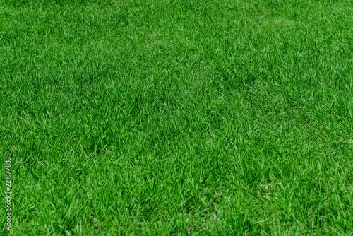 Fotobehang Cultuur Green grass background texture