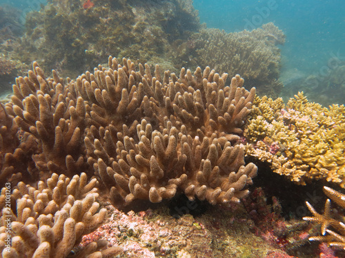 Fotobehang Koraalriffen Soft coral found at coral reef area at Tioman island, Malaysia