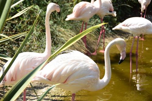 Keuken foto achterwand Flamingo Flamingo
