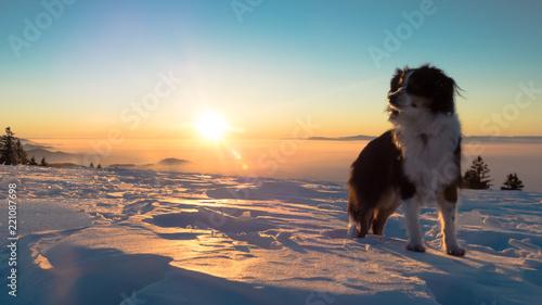Nala the Miniature Australian Shepherd, Winter Time Canvas Print