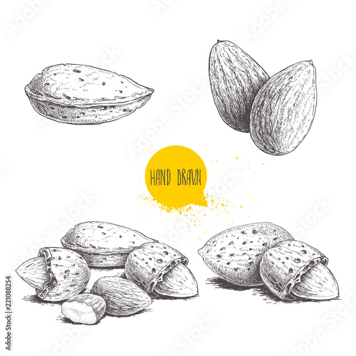Fototapeta Hand drawn sketch style almond set. Single, group seeds and almond in nutshells group. Organic food, vector illustrations collection isolated on white background. obraz