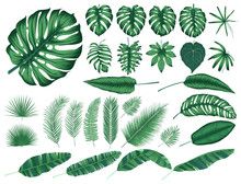 Detailed Tropical Leaves And P...